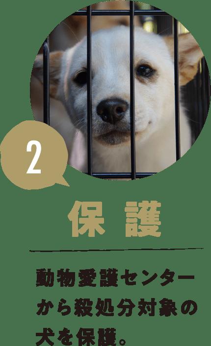 2.保護 動物愛護センターから殺処分対象の犬を保護。