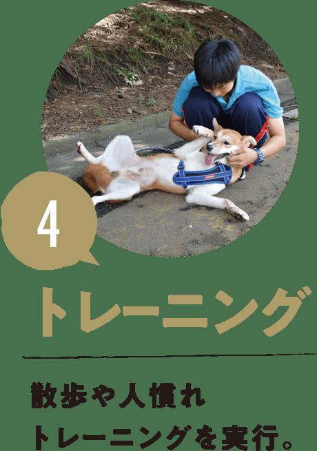 4.トレーニング 散歩や人慣れトレーニングを実行。