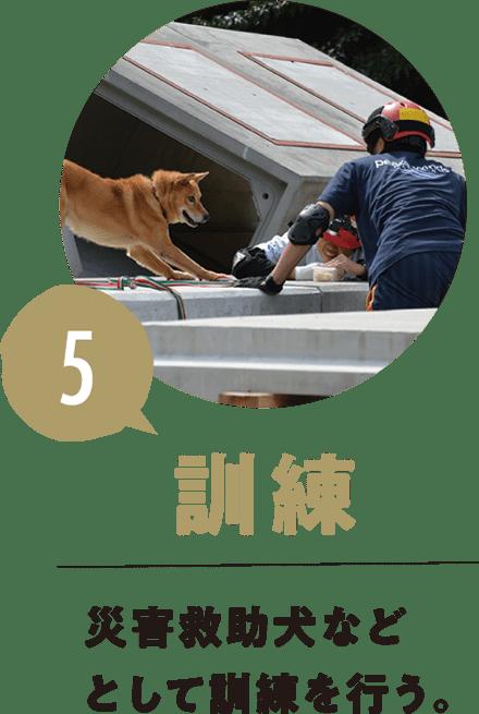 5.訓練 災害救助犬などとして訓練を行う。