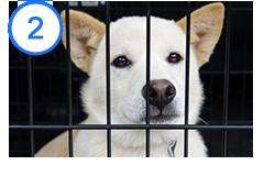 殺処分前の犬や捨て犬を保護する