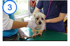 獣医師による健康管理を行う