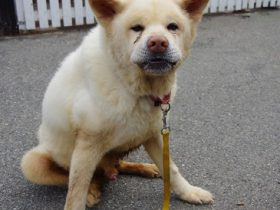 ペットも災害の犠牲者 広島土砂災害で保護した犬が天寿まっとう