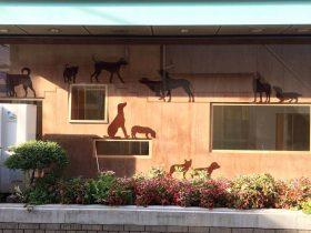 世田谷にも保護犬譲渡センター 新たな家族、見つける拠点に