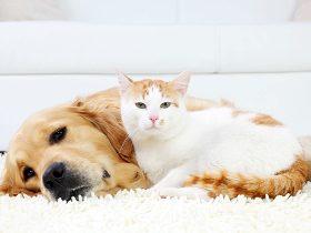 犬の専門家を育成「PRODOG」スクール開校