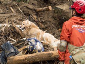災害救助犬と出動 においの動きが見える瞬間、鳥肌が立つ
