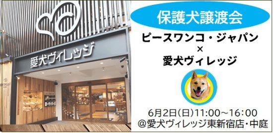 犬 東京 保護