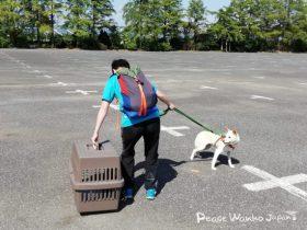 【ペット防災】災害時、あなたは愛犬と一緒に避難できますか?