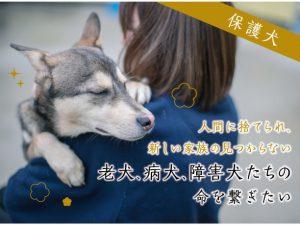 老犬・病犬・障害犬の命を繋ぎたい。クラウドファンディング開始!