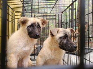 【保護活動】動物愛護センターからの引き出し(4月13日)