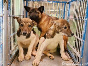 【保護活動】動物愛護センターからの引き出し(5月11日)