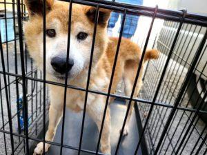 【保護活動】動物愛護センターからの引き出し(5月25日)