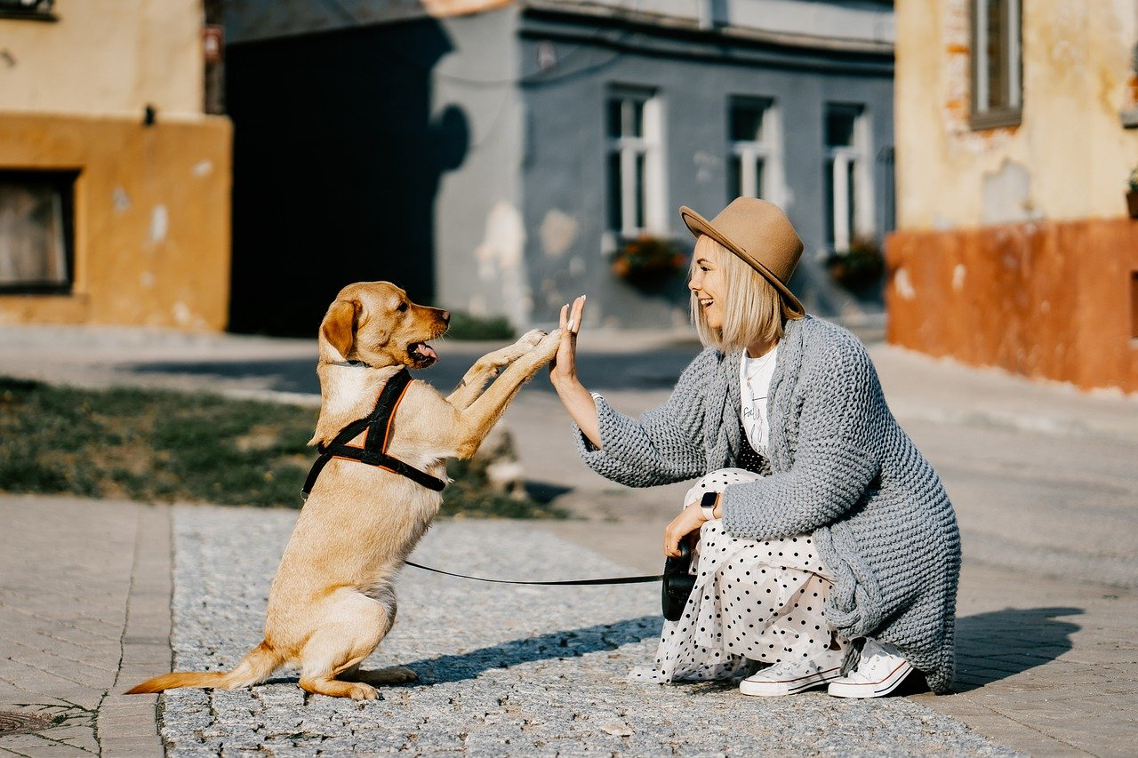 犬の低血糖は早めの処置が大切