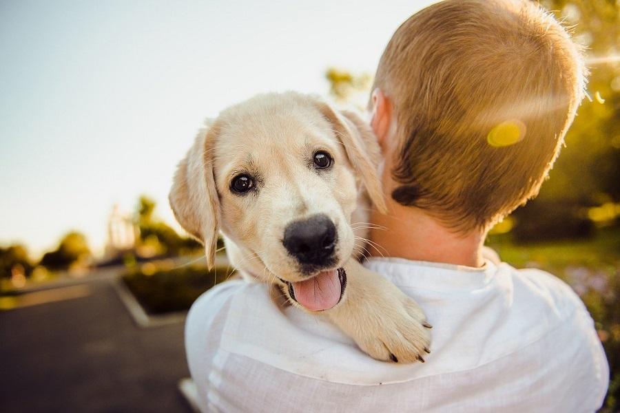 里親としてのペットを迎える準備とは?