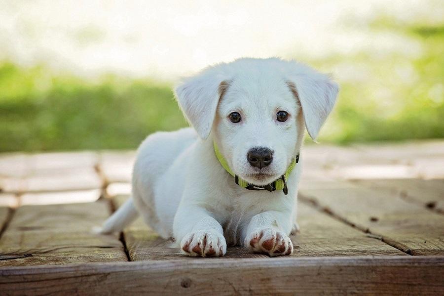 犬の里親になるためには事前によく確認することが大切